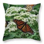 Monarch Butterfly 54 Throw Pillow
