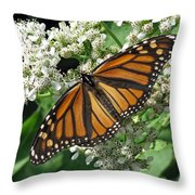 Monarch Butterfly 62 Throw Pillow