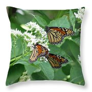 Monarch Butterfly 65 Throw Pillow