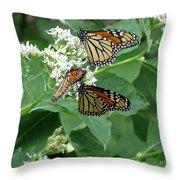 Monarch Butterfly 66 Throw Pillow