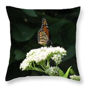 Monarch Butterfly 71 Throw Pillow