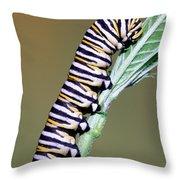 Monarch Butterfly Caterpillar Throw Pillow