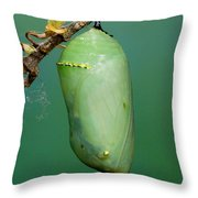 Monarch Butterfly Chrysalis Developing Throw Pillow