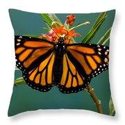 Monarch Butterfly Danaus Plexippus Throw Pillow
