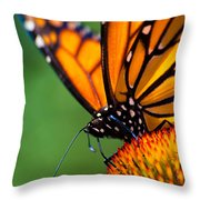 Monarch Butterfly Headshot Throw Pillow