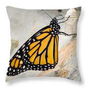Monarch Butterfly Just Emerged From Her Chrysalis Throw Pillow