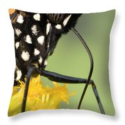 Monarch Butterfly Male Feeding Throw Pillow