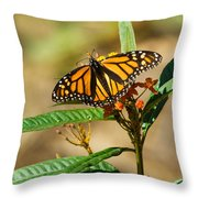 Monarch Butterfly On Plant With Eggs Throw Pillow