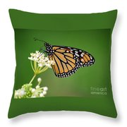 Monarch Butterfly On White Milkweed Flower Throw Pillow