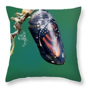 Monarch Butterfly Ready To Emerge Throw Pillow