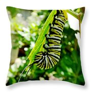 Monarch Caterpillar 5 Throw Pillow