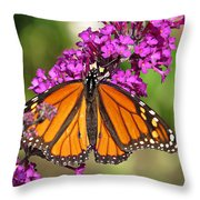 Monarch Hangs On To Buddleia Throw Pillow