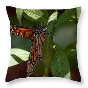Monarch In The Shade Throw Pillow