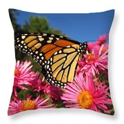 Monarch On Pink Asters Throw Pillow