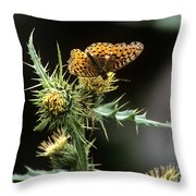 Monarch On Thistle Throw Pillow