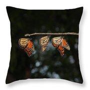Monarch Trio Throw Pillow