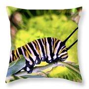 Monarch's Caterpillar.nz Throw Pillow