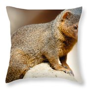 Mongoose Throw Pillow