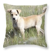 Mongrel Dog Puppy Throw Pillow