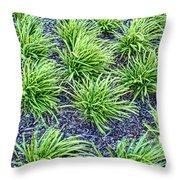 Monkey Grass Abstract Throw Pillow