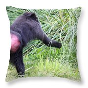 Monkey Showing Red Bottom Throw Pillow