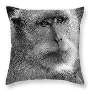 Monkey's Eyes Throw Pillow