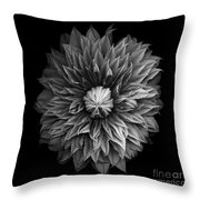 Monochrome Clematis Blossom Throw Pillow
