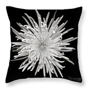 Monochrome Spider Chrysanthemum  Throw Pillow