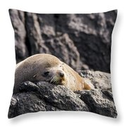 Montague Island Seal Throw Pillow