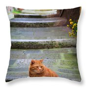 Montepulciano Cat Throw Pillow