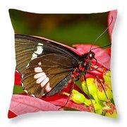 Montezuma Cattleheart Butterfly Throw Pillow