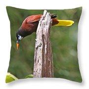 Montezuma Orependola Throw Pillow