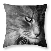 Moody Cat Throw Pillow