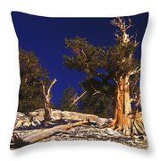 Moon And Bristlecone Pines Throw Pillow