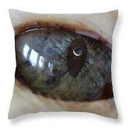 Moon In Cats Eye Throw Pillow