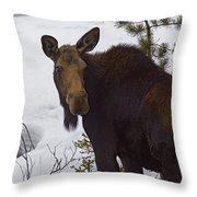 Moose   #1612 Throw Pillow