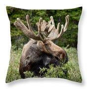 Moose Be Too Cool Throw Pillow