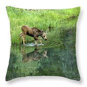 Moose Calf Testing The Water Throw Pillow