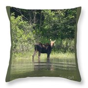 New Hampshire Grazing Cow Moose  Throw Pillow