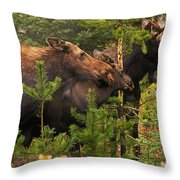 Moose Family At The Shredded Pine Throw Pillow