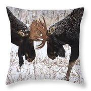 Moose Fighting, Gaspesie National Park Throw Pillow by Nicolas Bradette