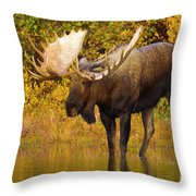 Moose In Glacial Kettle Pond  Throw Pillow