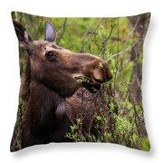 Moose Munch Throw Pillow