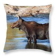 Moose On The  Gros Ventre River Throw Pillow