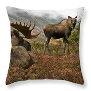 Moose Pair On Anchorage Hillside Throw Pillow