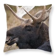 Moose Pictures 101 Throw Pillow