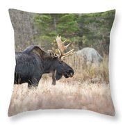 Moose Pictures 75 Throw Pillow