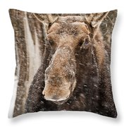 Moose Pictures 88 Throw Pillow