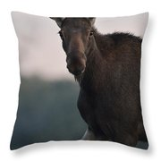 Moose Portrait Throw Pillow