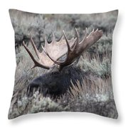 Moose Relaxing Throw Pillow
